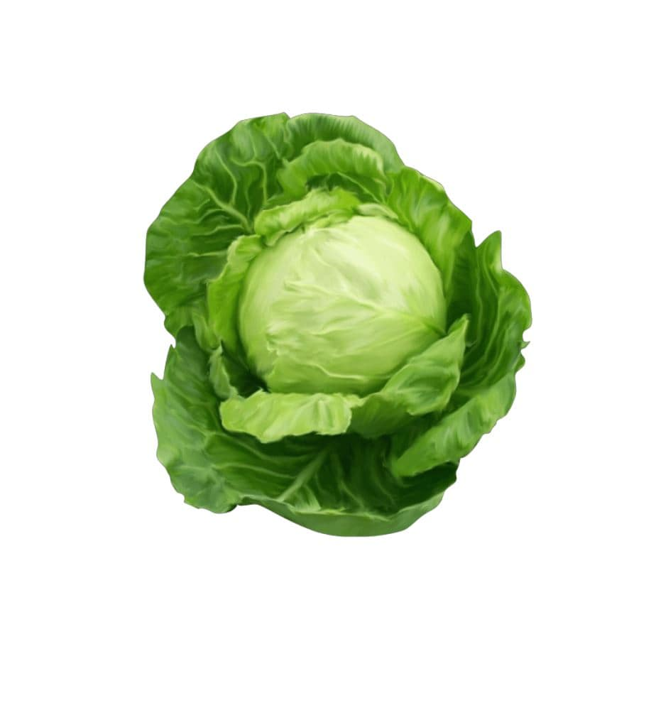 Cabbage (Green &#038...