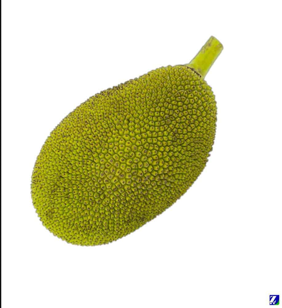 Jackfruit (Fresh)