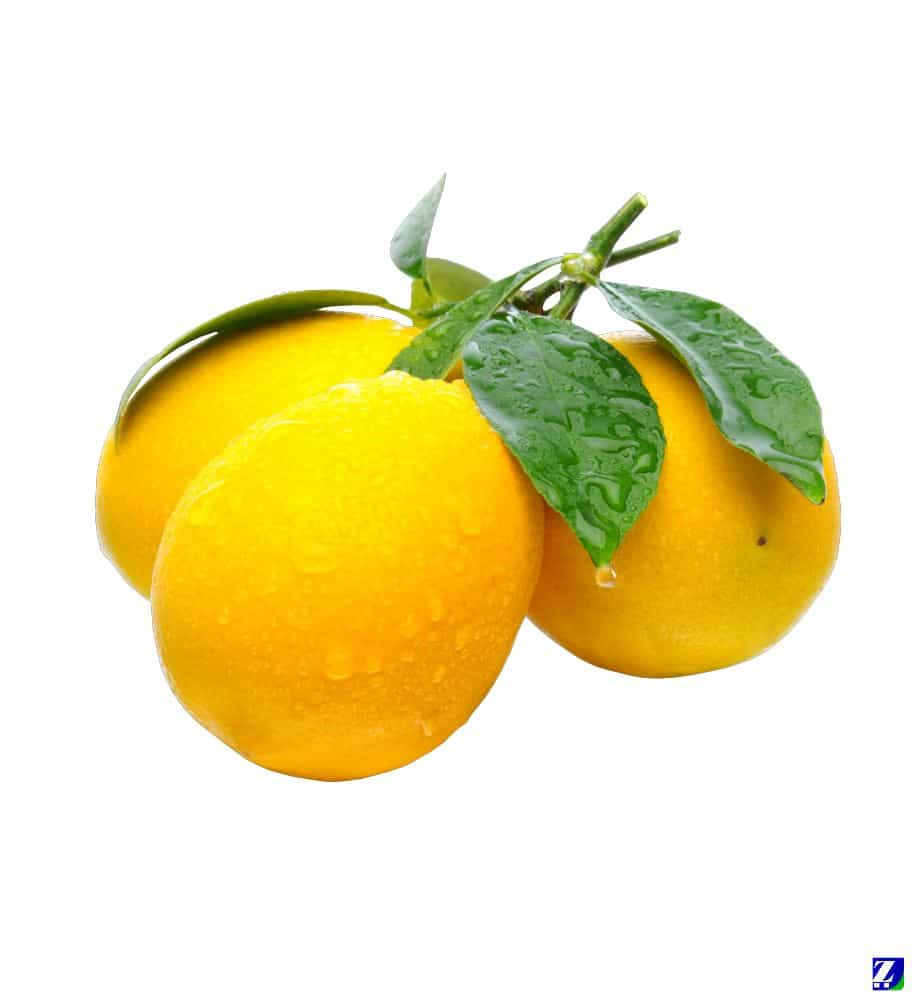 Lemon (Fresh)